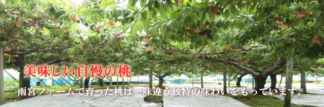 雨宮ファームの桃