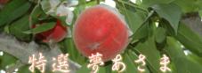 yumeasato1p